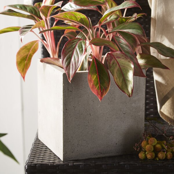 3-Piece Composite Pot Planter Set by My Spirit Garden
