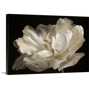'White Tulip' by Cora Niele Photographic Print on Wrapped Canvas by Great Big Canvas