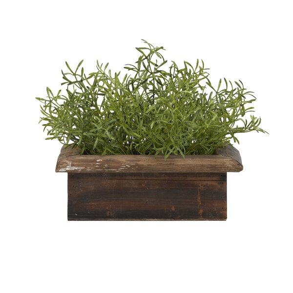 Asparagus Desktop Ficus Grass in Planter by Bloomsbury Market