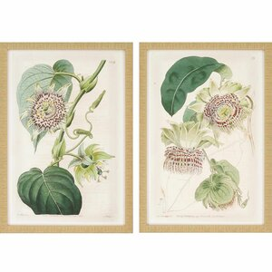 Antique Flowers 2 Piece Framed Graphic Art Set by Paragon