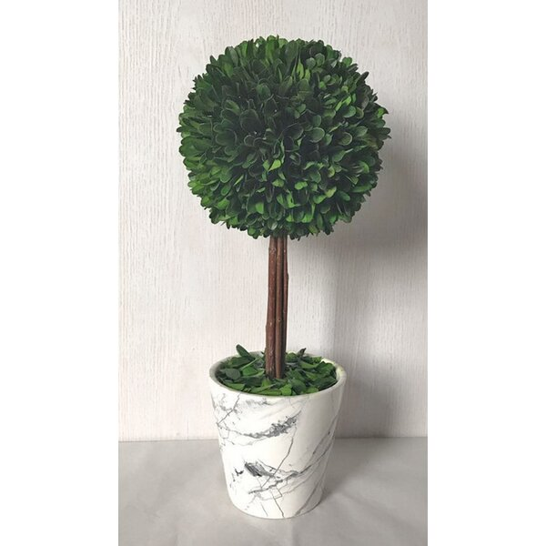 Desktop Boxwood Topiary in Pot by Wrought Studio