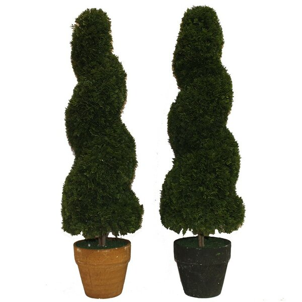 Spiral Cedar Topiary in Pot by ESSENTIAL DÉCOR & BEYOND, INC