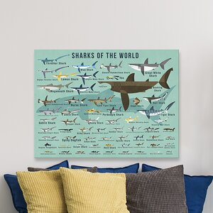 Sharks of The World by Daviz Canvas Art by Oopsy Daisy