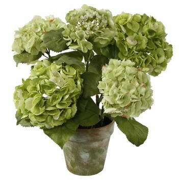 Potted 5 Blossoms Hydrangea Floral Arrangement in Pot by Jane Seymour Botanicals