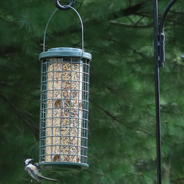 Wire Tube Bird Feeder by Wildon Home ®