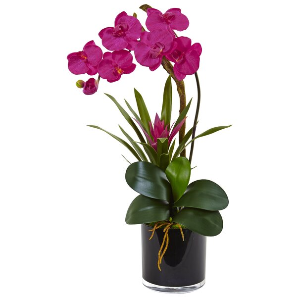 Silk Orchid and Bromeliad Mixed Floral Arrangement in Planter by House of Hampton