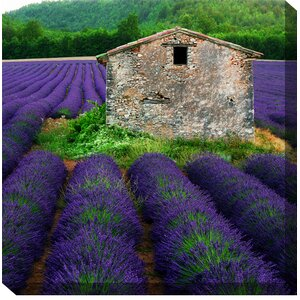 La Lavender Framed Photographic Print on Wrapped Canvas by West of the Wind Outdoor Canvas Art