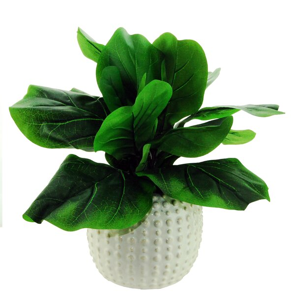 Fig Desktop Foliage Round Tapered Plant in Pot by Highland Dunes