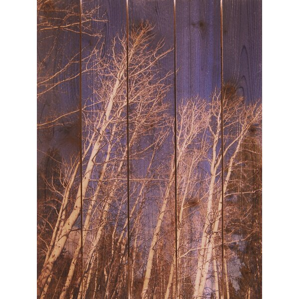 Winter Aspens Photographic Print by Gizaun Art