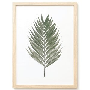'Palm Leaf' Framed Graphic Art Print on Glass by Elizabeth Hales Design