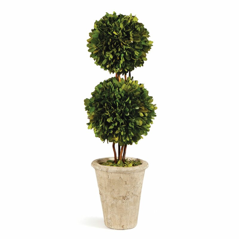 Preserved Boxwood Double Ball Topiary in Pot