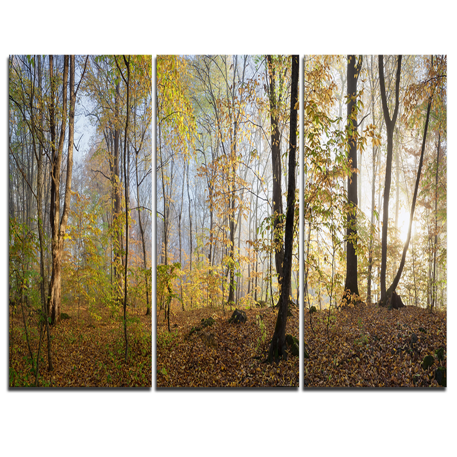 Designart Green Autumn Forest In Morning 3 Piece Photographic Print On Wrapped Canvas Set Wayfair