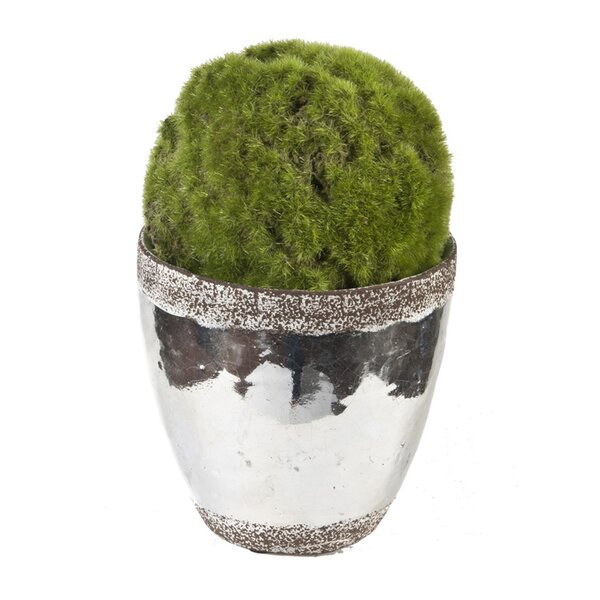Faux Moss Ball Topiary in Ceramic Pot by Creative Branch
