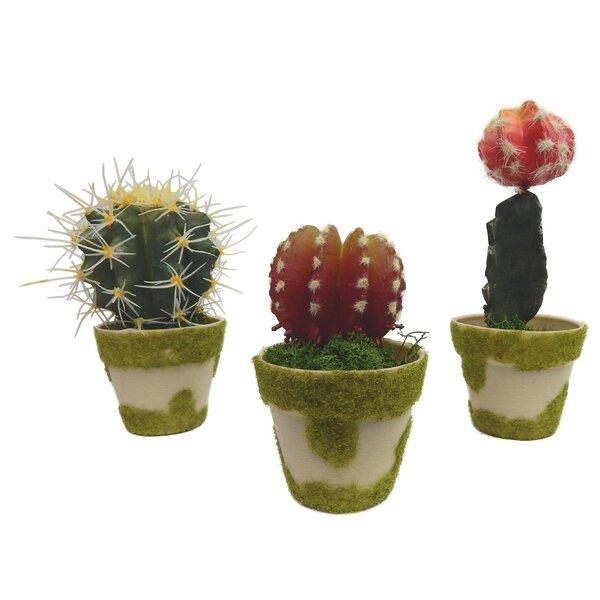3 Piece Cactus Garden Set in Faux Moss Pots by Trent Austin Design