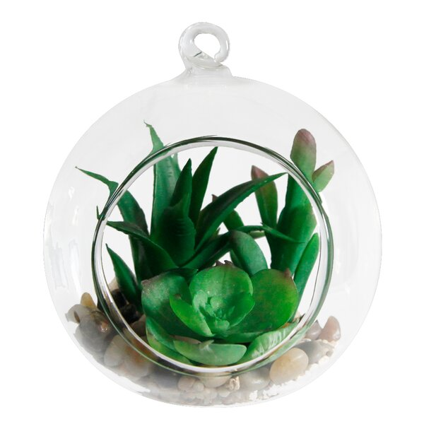 Desktop Succulent Plant in Box by Flora Bunda