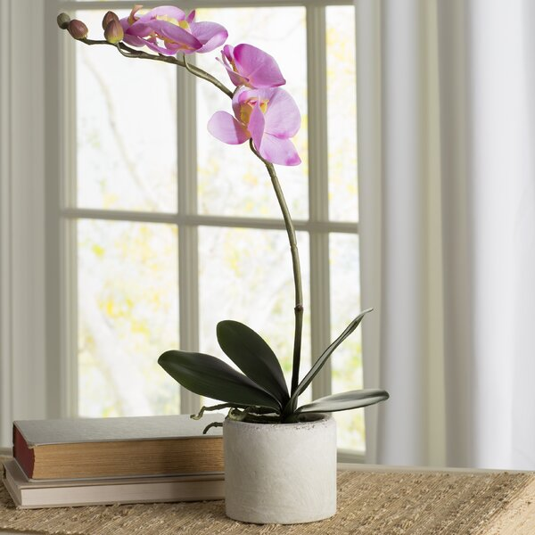 Artificial Orchid Flowers in Pot by Ophelia & Co.