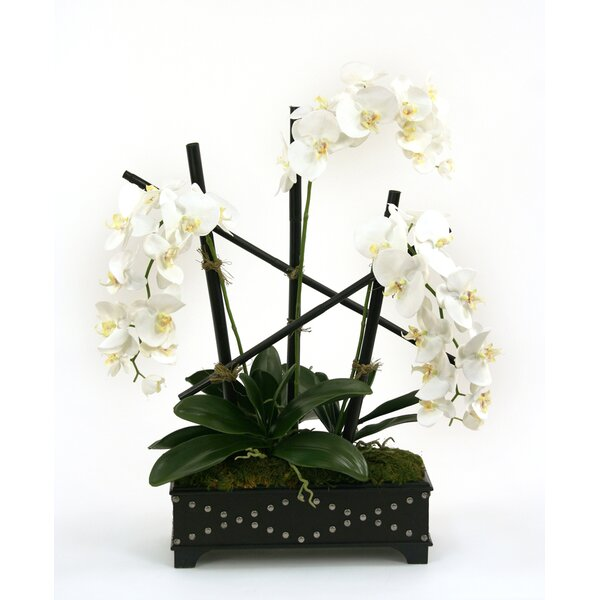 Silk Phalaenopsis Orchids in Box with Studs by Distinctive Designs