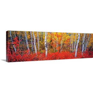 'Changing Seasons' by Gary Crandall Photographic Print on Wrapped Canvas by Great Big Canvas
