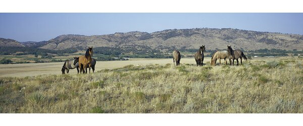 Wild Mustang Herd, Black Hills Wild Horse Sanctuary, Hot Springs, Fall River County, South Dakota, USA Photographic Print on Wrapped Canvas by East Urban Home