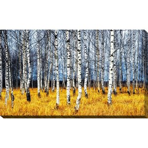 'Birch Trees 2' Photographic Print on Wrapped Canvas by Picture Perfect International