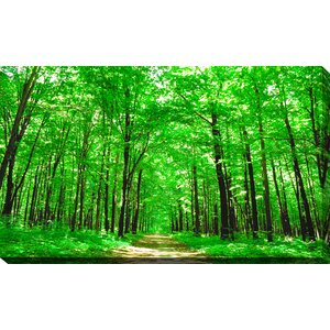 'Bright Summer Forest II' Photographic Print on Wrapped Canvas by Picture Perfect International