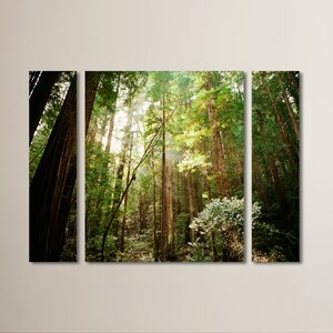 Muir Woods 3 Piece Photographic Print on Wrapped Canvas Set by Red Barrel Studio