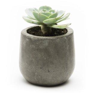 Samai Composite Pot Planter