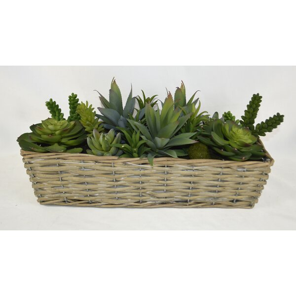 Desktop Succulent Plant in Willow Basket by Ivy Bronx