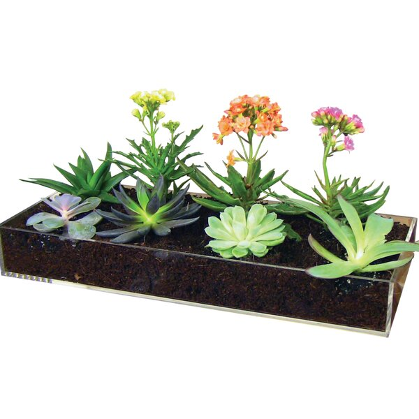 Multi-Use Planter Tray by Window Garden