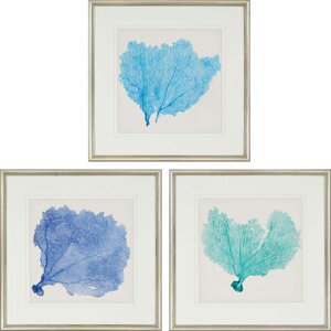 Sea Fan II Giclee by Anonymous 3 Piece Framed Graphic Art Set (Set of 3) by Paragon