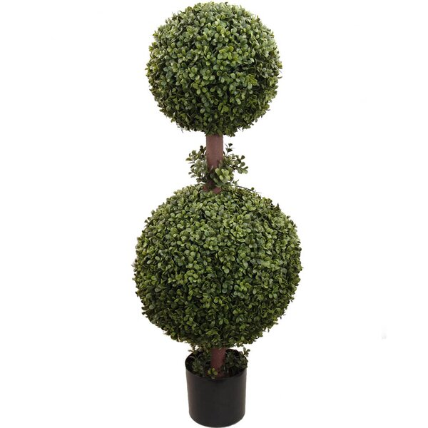 Ball Topiary Boxwood in Pot by Larksilk