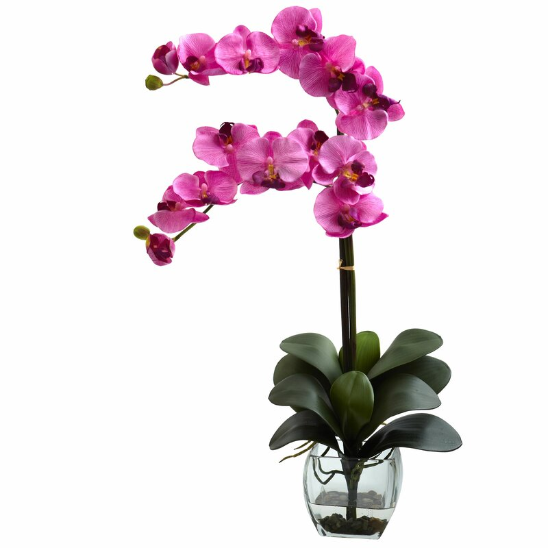Double Phalaenopsis Orchid in Vase