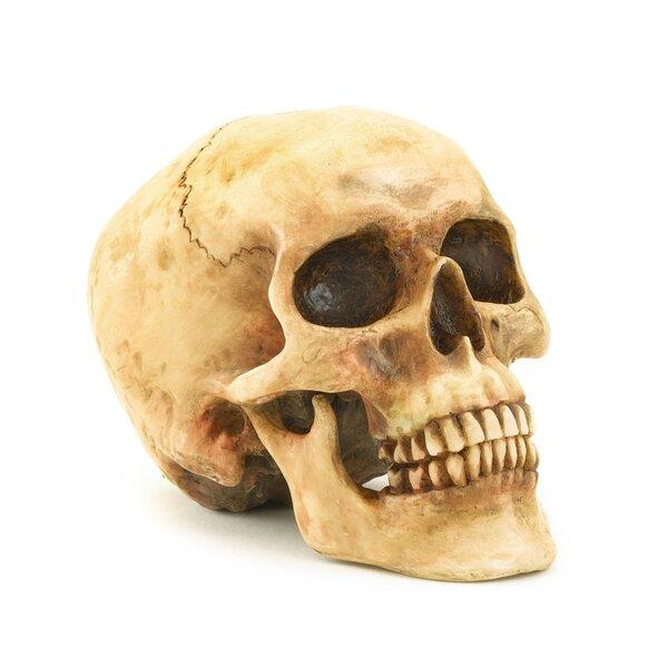 Bonehead Skull by Zingz & Thingz