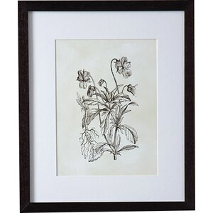 'Flora I' Framed Painting Print by August Grove