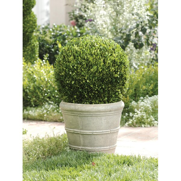 18 Diameter Single Ball Preserved Floor Boxwood Topiary in Pot by Zodax