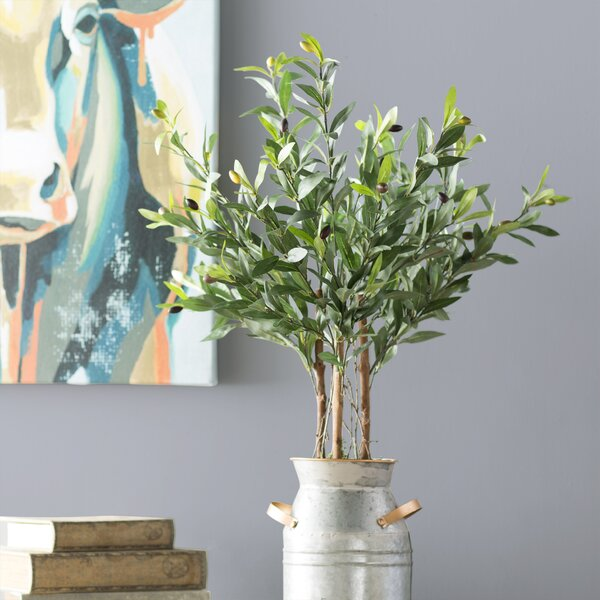 Olive Tree in Pot by Laurel Foundry Modern Farmhouse