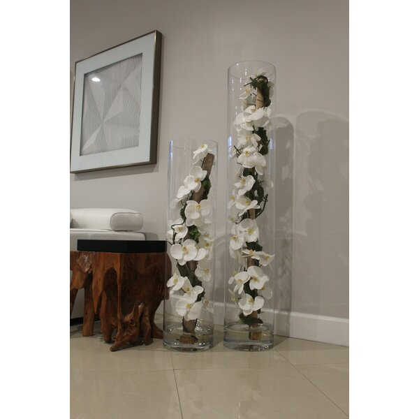 Phalaenopsis Orchid Floral Arrangement in Vase by House of Hampton