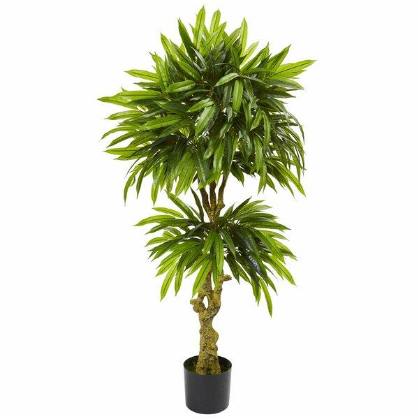 Slim Mango Ficus Plant by Bayou Breeze