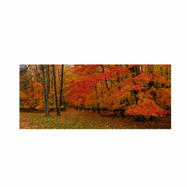 Ohio Autumn by Kurt Shaffer Framed Photographic Print on Wrapped Canvas by Trademark Fine Art
