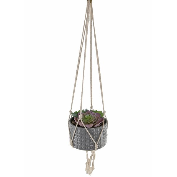 Hanging Succulent Plant in Planter by George Oliver