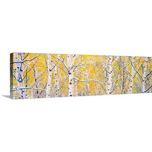 'Black Aspens' by Gary Crandall Graphic Art on Wrapped Canvas by Great Big Canvas