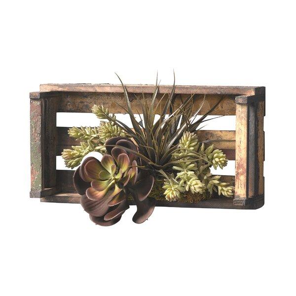 Echeveria, Sedum and Tilandsia Floor Succulent Plant in Wooden Tray by Bungalow Rose