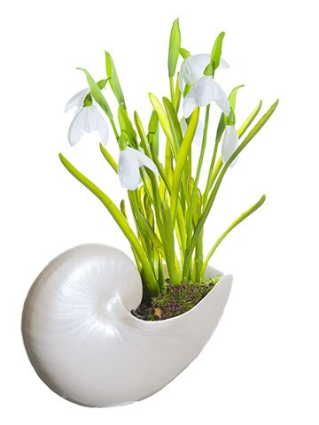 Snowdrop Floral Arrangement in Decorative Vase by Breakwater Bay