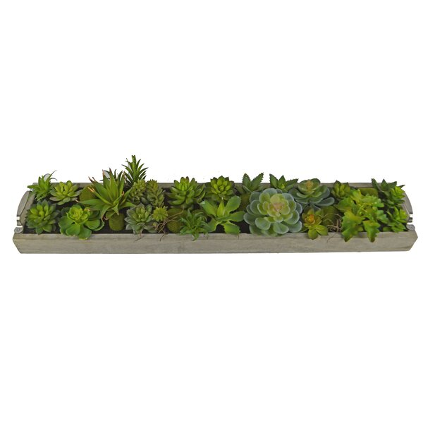 Desktop Succulent Plant in Rectangular Pot by Wade Logan