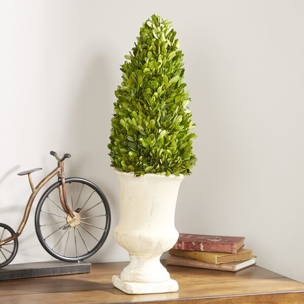 Preserved Greens Topiary in Urn by Ophelia & Co.