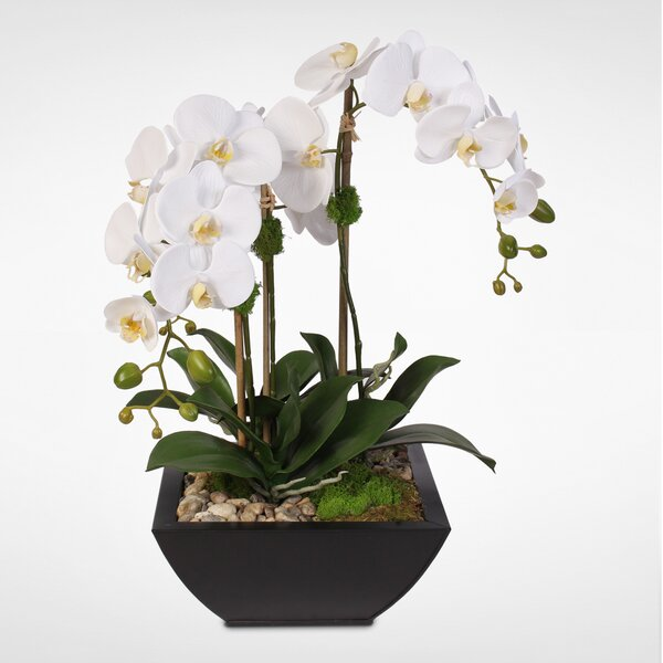 Handmade Phalaenopsis Orchid and Artificial Succulents Floral Arrangement in Pot by Brayden Studio