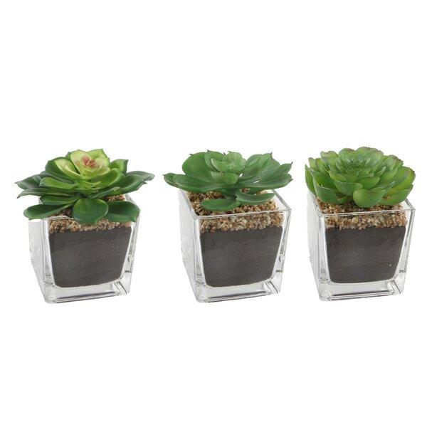 3 Piece Succulent Desktop Plant in Pot Set by Ebern Designs