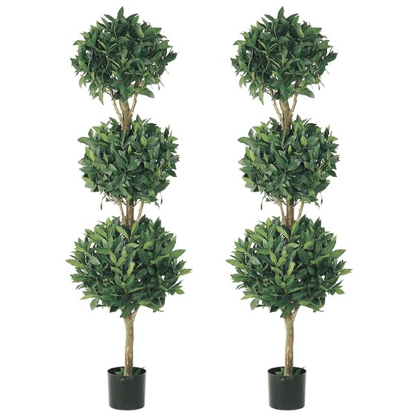 Triple Ball Sweet Bay Foliage Topiary in Pot (Set of 2) by Latitude Run