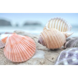 'Crescent Beach Shells X' Photographic Print on Canvas by East Urban Home