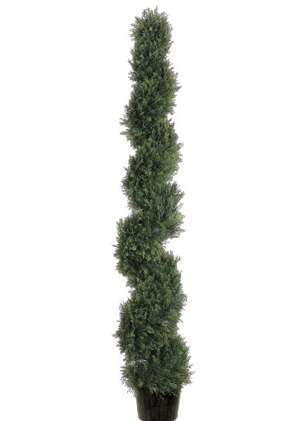 Spiral Cedar Topiary in Pot by Darby Home Co